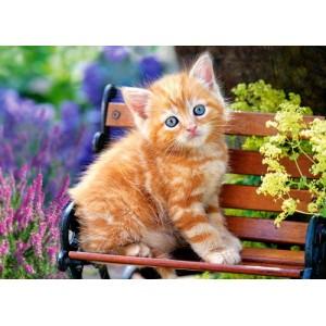 Puzzle 500 dílků- Kotě na lavičce